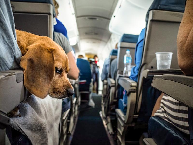 Voyagez avec votre animal de compagnie